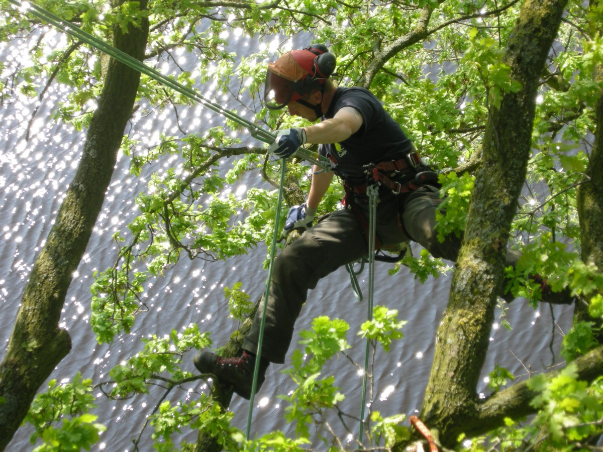 Onze ETW opgeleide boomverzorgers hebben veel ervaring met het aanplanten, verplanten en snoeien van bomen.