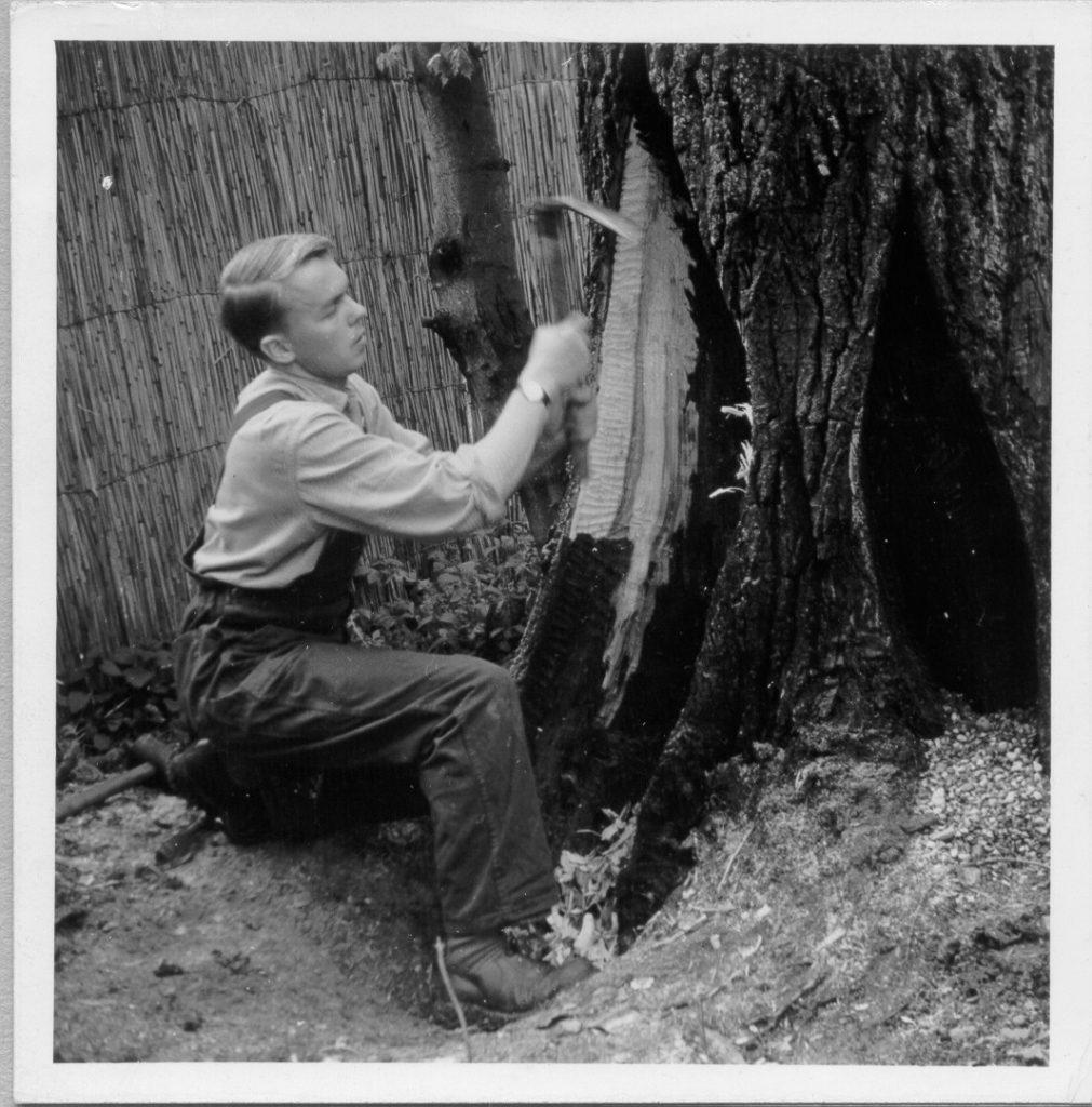 Op 1 oktober 1966 begon Copijn met het redden en verzorgen van oude bomen.
