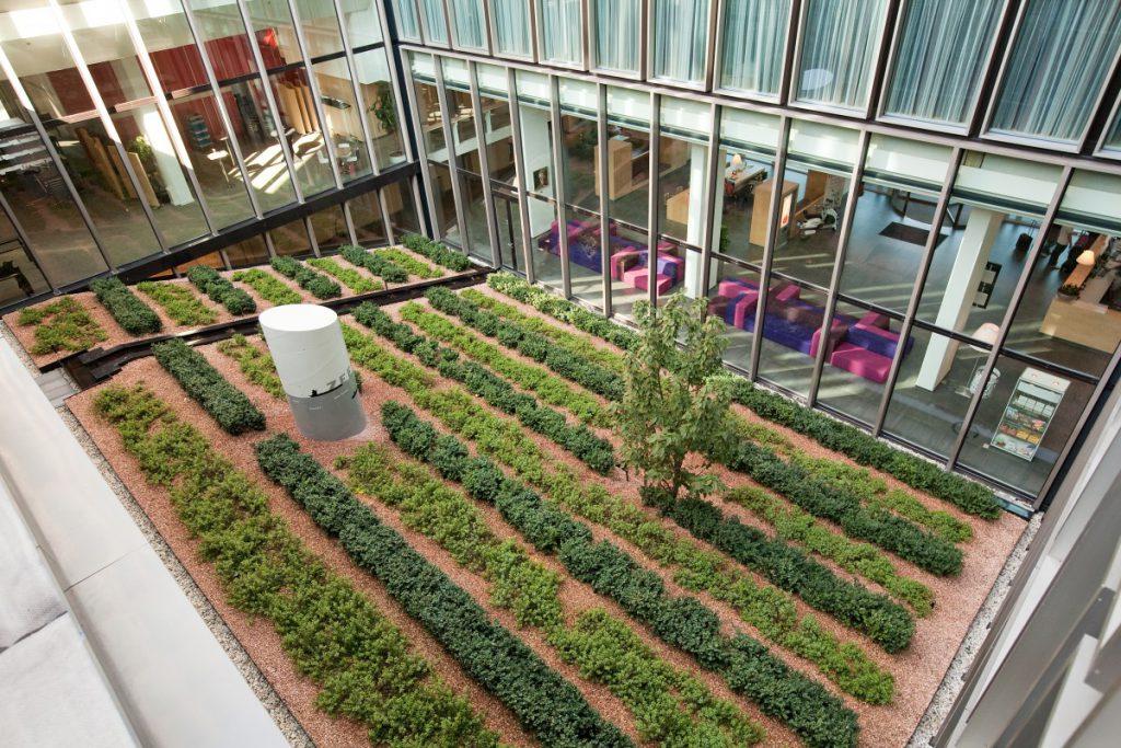 Copijn Groenaanleg en beheer heeft deze binnentuin, op het dak van de parkeergarage, en het hoger gelegen groendak met sedum gerealiseerd.