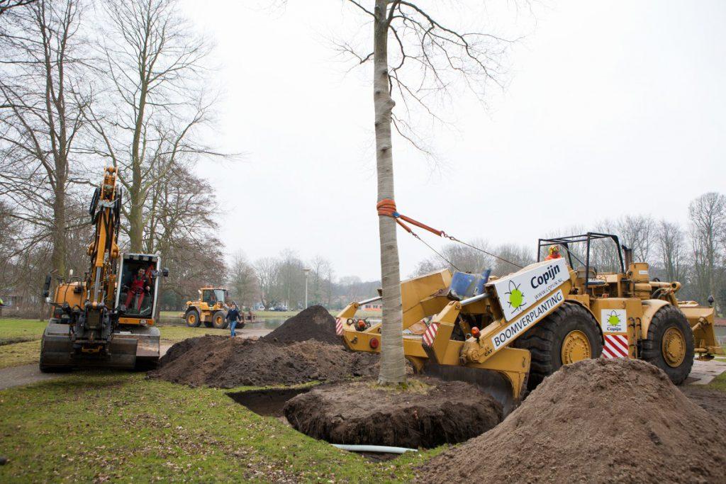 De verplanting werd uitgevoerd met de Caterpillar verplantmachine van Copijn Boomspecialisten. Ruim 2500 bomen beoordeeld op verplantbaarheid.