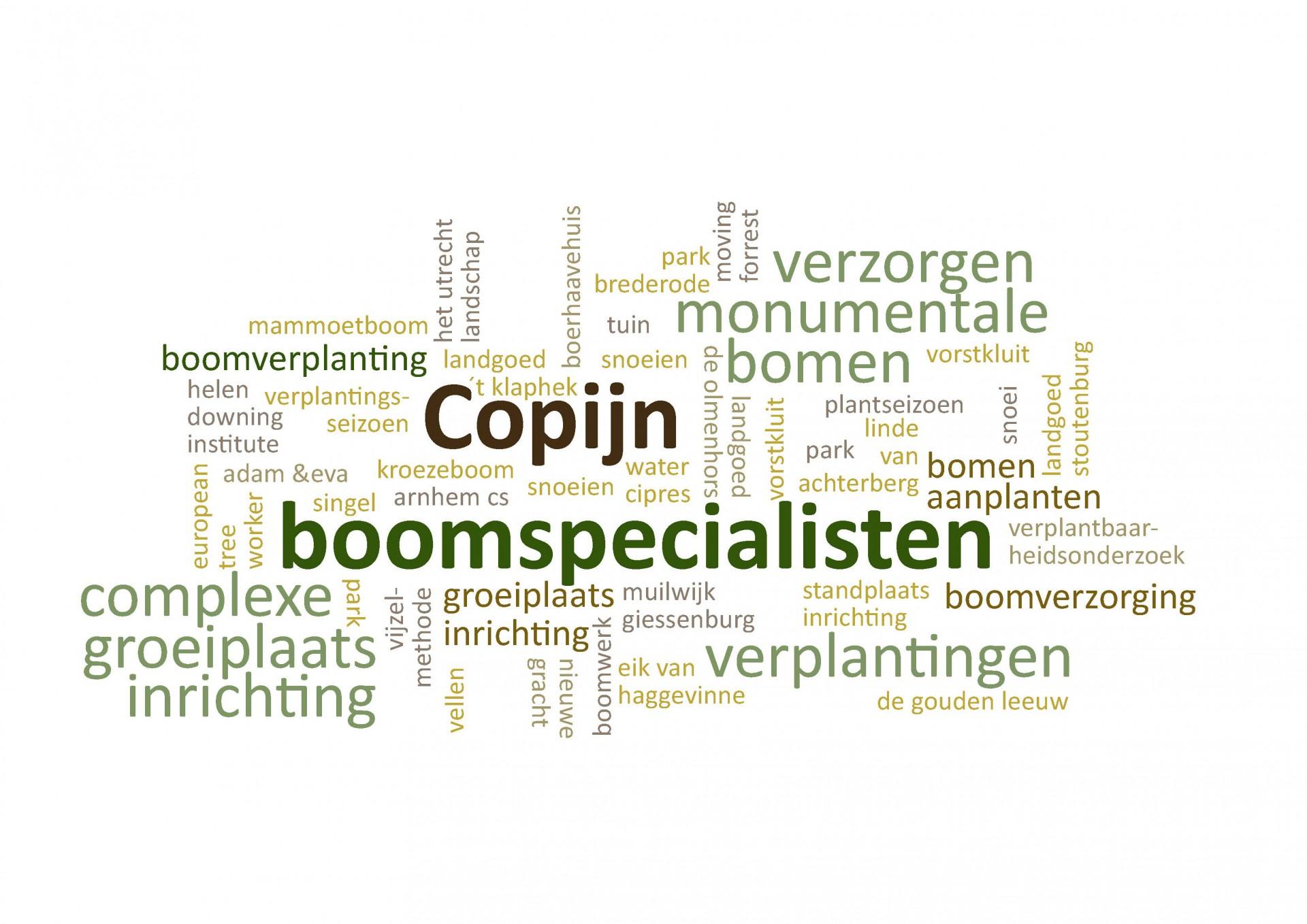 Copijn Boomspecialisten is als eerste in Nederland begonnen met het professioneel verzorgen van bomen. Ons team adviseert omtrent de uitvoering van boomverzorgende maatregelen, het verplanten van grote bomen of het in stand houden van monumentale bomen.