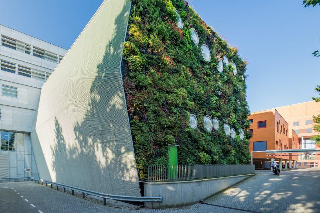 invulling te geven aan een groene uitstraling van een deel van de gevels van het gebouw.