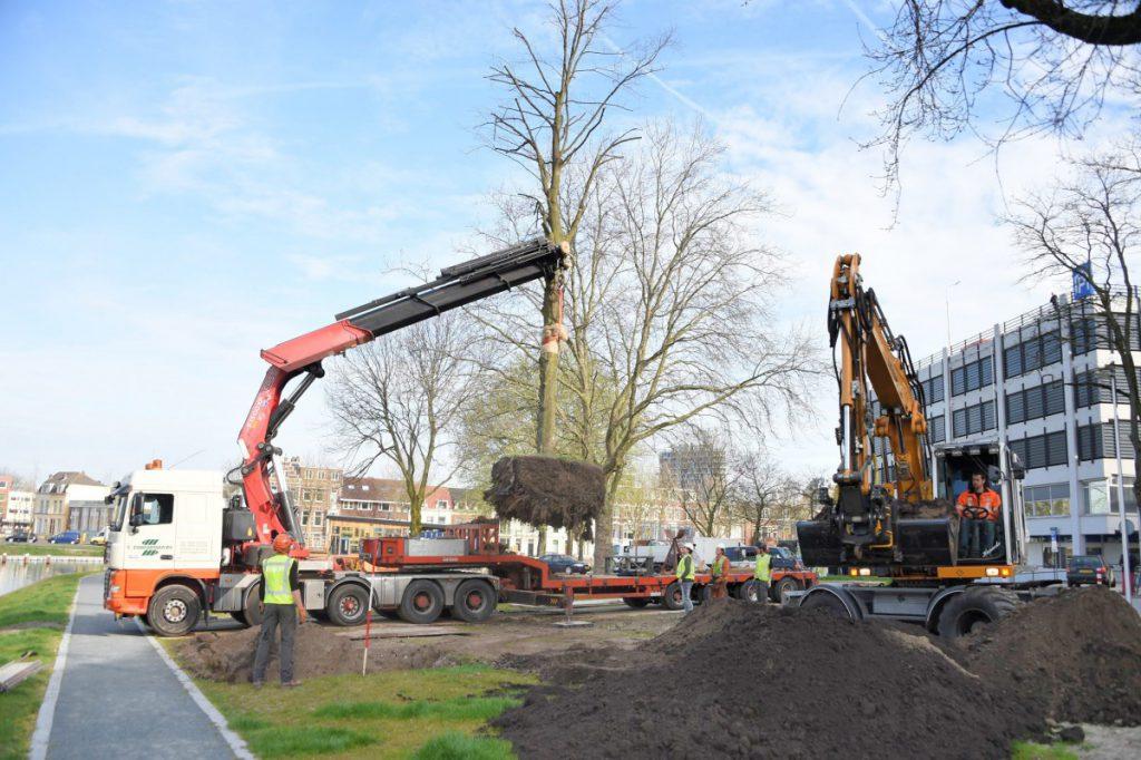 Copijn-Boomverhuizing-Utrecht