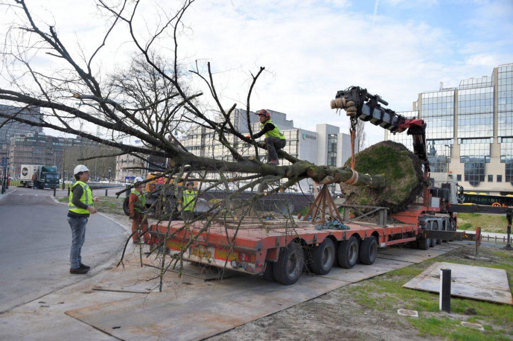 Copijn-Boomverplanting-Utrecht