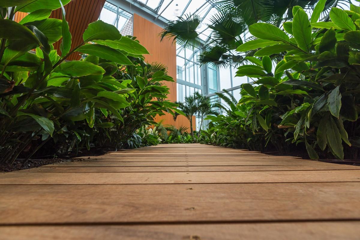 Effecten van Interieurbeplanting op de werkplek