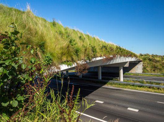 Door onze kennis van verticale beplanting werd Copijn Groenaanleg en beheer benaderd om het viaduct te bekleden met groene wand.