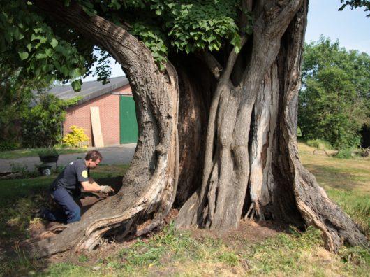 Op 1 oktober 1966 begon Copijn met het redden en verzorgen van oude bomen. De nog jonge Jørn Copijn introduceerde toen boomchirurgie als eigen discipline in Nederland.