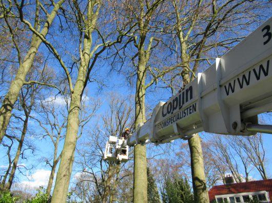 Boomonderzoek copijn boomspecialist
