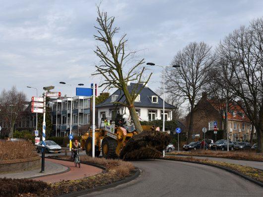 Boomverplanting Leiden Copijn