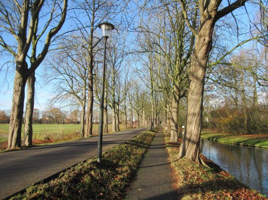 Vitaliteitsonderzoek van de vier Dreven in Culemborg. Uitgevoerd door Copijn Advies.