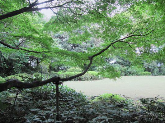 Copijn Japanse Tuin Nederlandse Ambassade Tokio gras