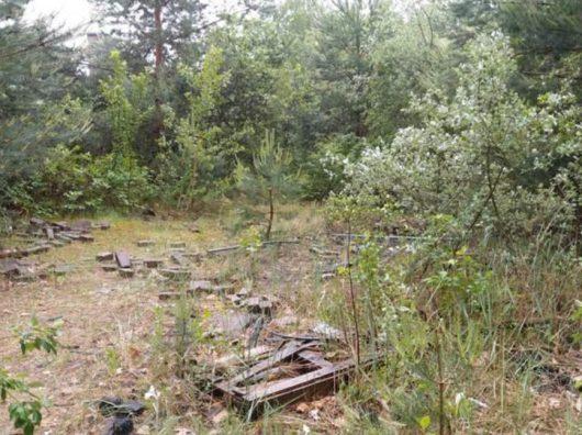 Potentieel leefgebied van de hazelworm Gemeente Zeist Gemeentewerf Copijn