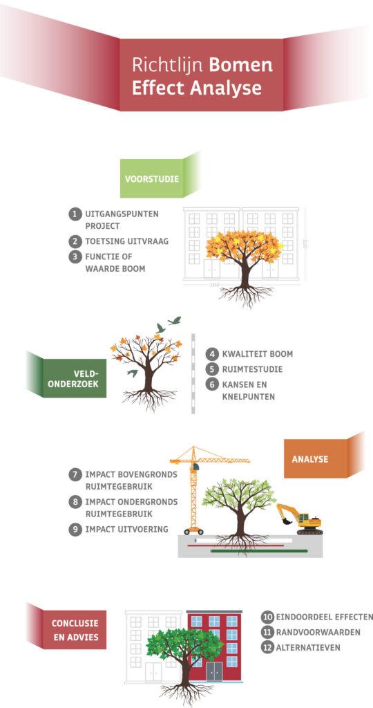 Richtlijn Bomen Effect Analyse Infographic