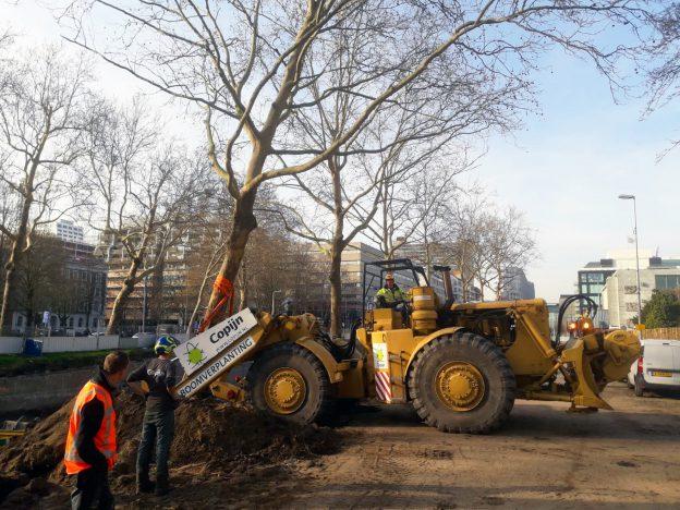 Boomverplanting Catherijnesingel Utrecht Copijn