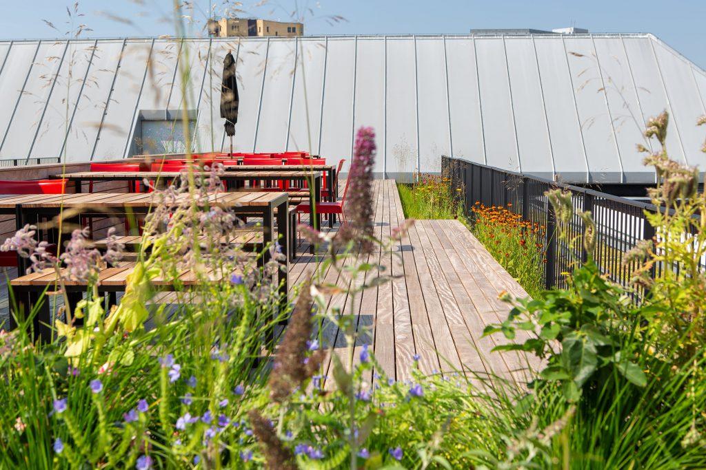 Haarlemmerhof Kennedy van der Laan Daktuin Copijn vanuit beplanting
