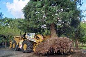 Boomverplanting Copijn
