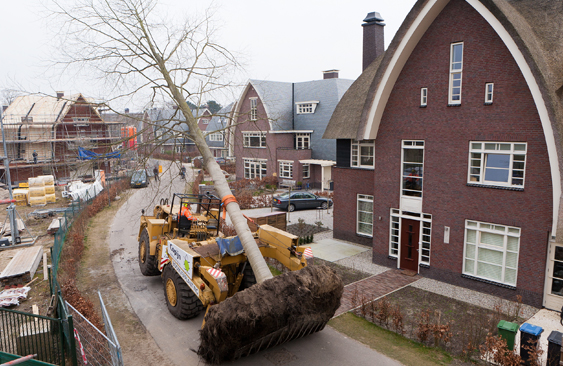 Boomverplanting Copijn Boomspecialisten
