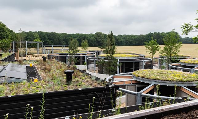 Groene daken bij wildopvang Avolare