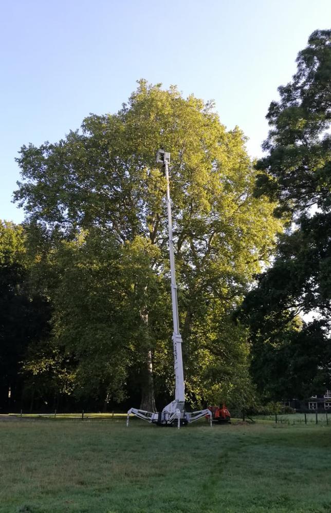 boomverzorging buitenplaats Doornburgh